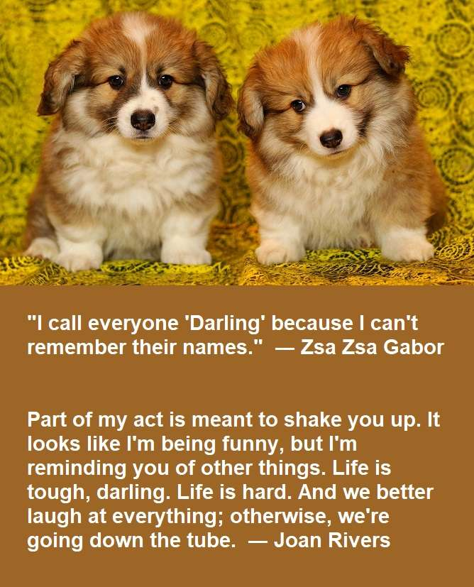two darling quotes
